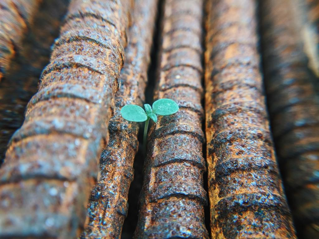 A green sprout emerging through rebar, Photo by Faris Mohammed on Unsplash